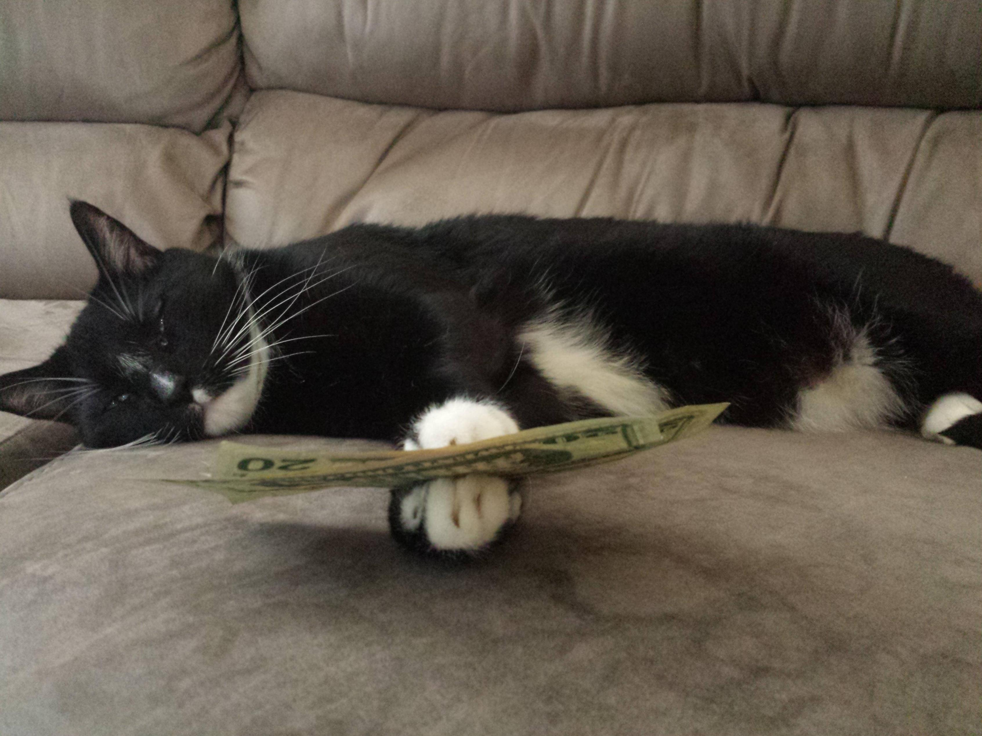 cat with money in hands